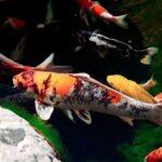 Топ-5 красивых аквариумных рыбок