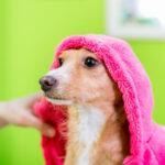 Воспаление уха у собаки — что делать?