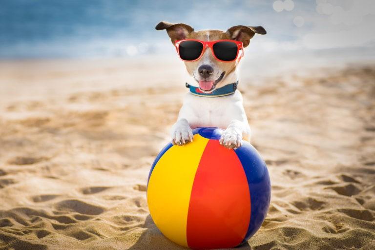 Топ 11 аксессуаров для собаки на лето