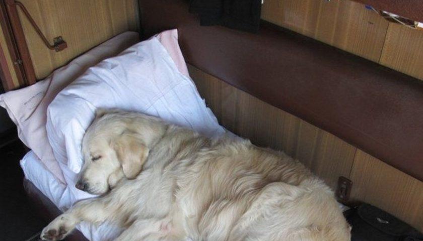 Как правильно перевозить собаку в поезде РЖД