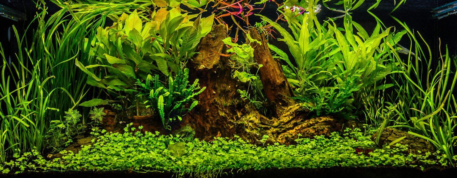 Как правильно выбрать питательную подложку для аквариума?