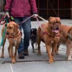 Как научить собаку ходить на поводке?