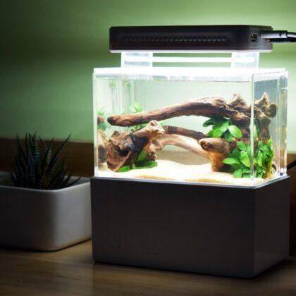Содержание рыбок неонов в домашних условиях! Чем питаются и их разновидность.