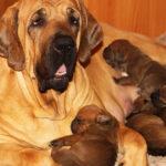Подборочка 5 редких пород собак