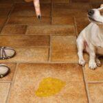 Как разучить собаку, чтобы она перестала писать дома?