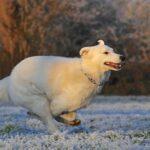 Основные виды заболеваний у собак