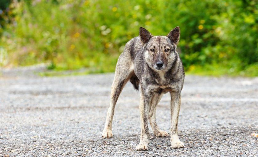 Что делать при встрече с бродячей собакой: правила безопасности и защита