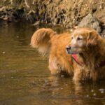 Цистит у собак: симптомы и лечение (и профилактика)