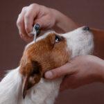 Какую выбрать расческу для шерсти своей собаки?