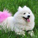 Самые лучшие породы собак