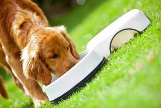 Свежий рейтинг 2020 года различных кормов для собак