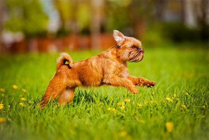 5 Гипоаллергенных пород собак в 2020 году