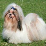 10 добрых пород собак на свете