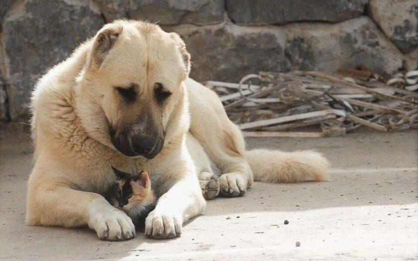Гампр: история происхождения и характер собаки