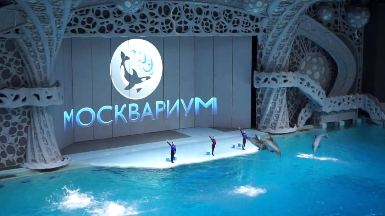 Куда пойти в Москве с ребенком: Москвариум