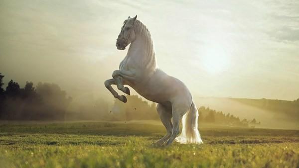 Лошадь:виды,породы,масти,содержание,уход,болезни,размножение,фото,поведение,питание