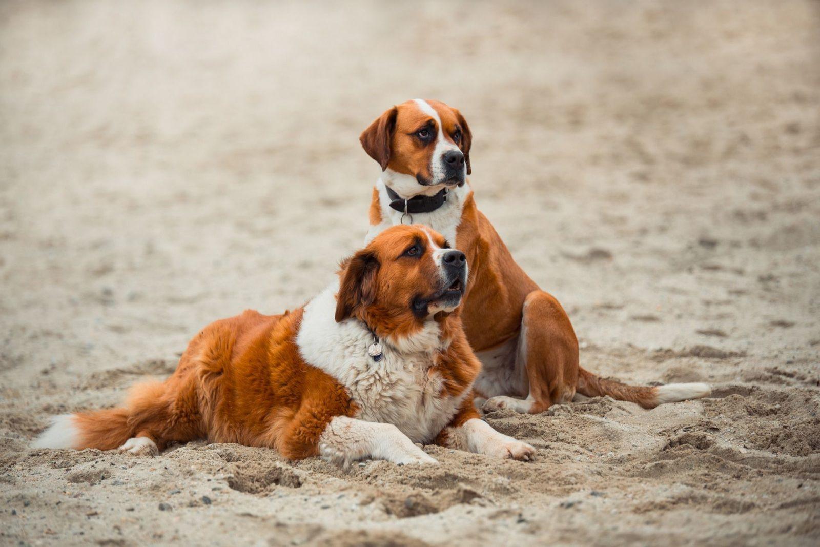 Что нужно знать перед тем как приобрести собаку — вопросы на которые мы должны ответить сами себе