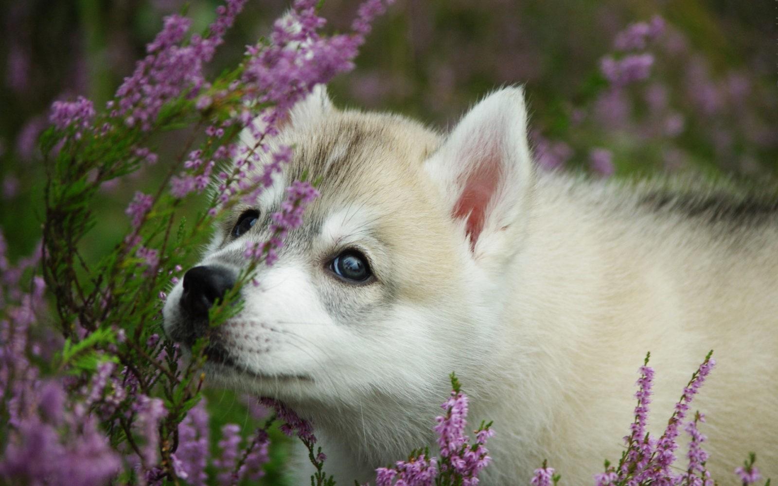 История происхождения собак и классификации пород