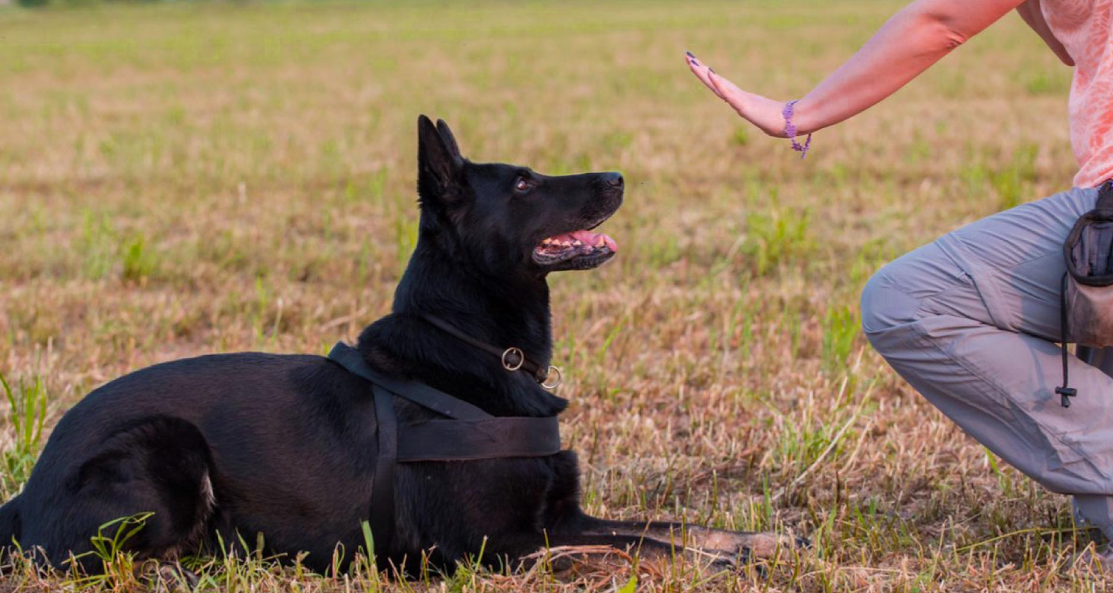 Как правильно дрессировать собаку?