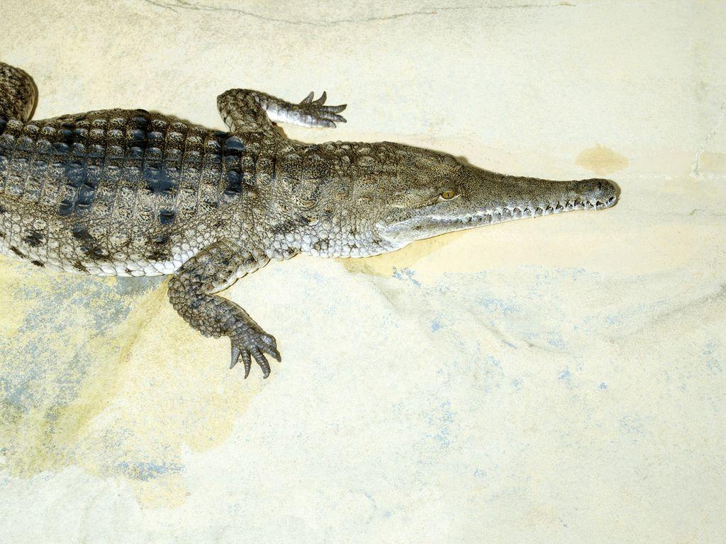 10 интересных фактов о крокодилах.. Где живут крокодилы