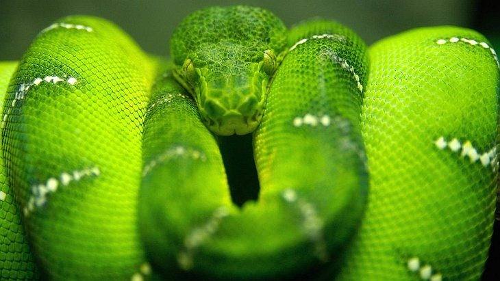 10 самых опасных животных ядов на земле