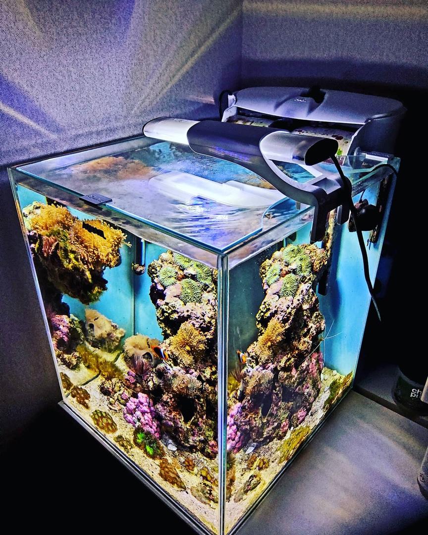 Обзор аквариумного набора AQUAEL NANOREEF DUO