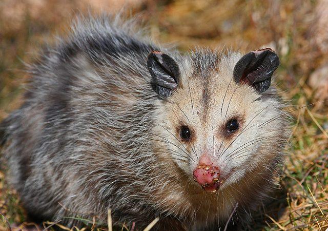 Самые зубастые животные в мире