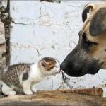 Слепого котенка забрали от мамы и бросили…