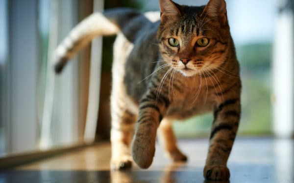 Что делать, если кошка ходит кругами