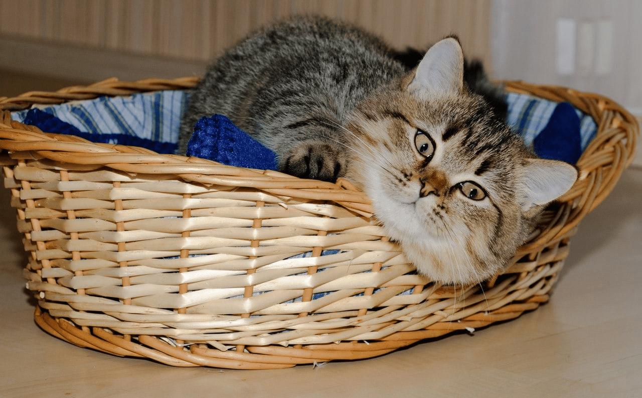 Пять принципов комфортной жизни кошки в квартире