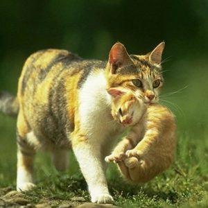 Едят ли кошки своих котят на самом деле