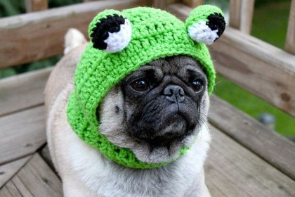 Sad-Pug-in-hats-6